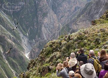 Colca Canyon Tour & Return to Arequipa