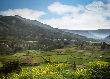 Colca Canyon Tour & Overnight