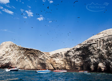 Ballestas Islands Tour & Return to Lima
